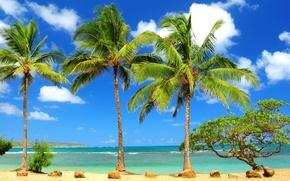 Картинка море, камни, пальмы, дерево, океан, кривое
