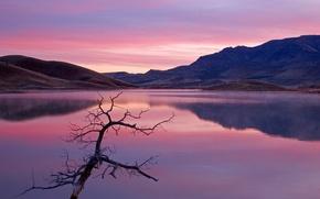 Картинка озеро, отражение, холмы, Ветка