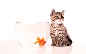 Обои котенок, рыбка, аквариум