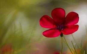 Картинка цветок, цветы, фон, widescreen, обои, размытие, wallpaper, flower, широкоформатные, background, полноэкранные, HD wallpapers, широкоэкранные, fullscreen, …