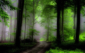 Картинка лес, деревья, туман, путь