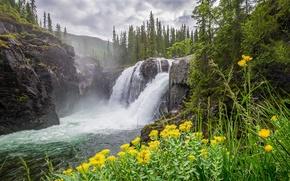 Обои камни, река, скалы, облака, лес, мох, деревья, водопад, горы, желтые, цветы