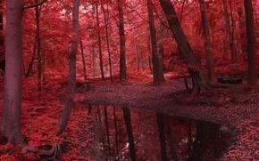 Картинка осень, лес, листья, вода, деревья, пейзаж, природа, река, красное, красота