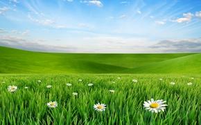 Картинка небо, облака, пейзаж, цветы, природа, ромашки, луг, grass, травка, sky, landscape, nature, flowers, clouds, meadow, …