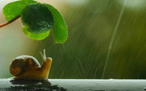 Картинка umbrella, shell, snail, raining