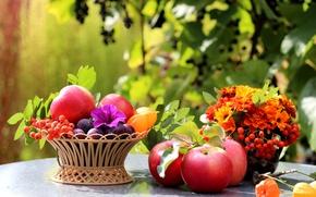Картинка цветы, стол, листья, натюрморт, фрукты, рябина, корзина, яблоки, сливы