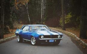 Картинка спереди, Camaro, дорога, фары, листья, Chevrolet, колеса, осень, лес