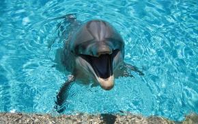 Картинка вода, дельфин, улыбка