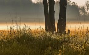 Картинка лето, трава, природа
