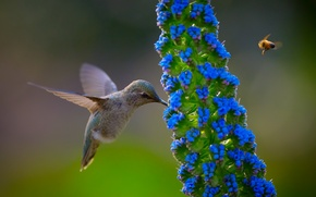 Картинка цветок, природа, птица, колибри