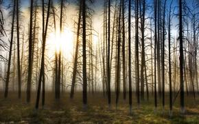 Обои Деревья, туман, солнце
