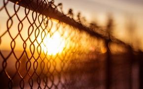 Картинка солнце, макро, фон, сетка, widescreen, обои, забор, размытие, ограда, ограждение, день, wallpaper, широкоформатные, background, sun, …