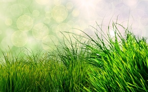 Обои природа, трава, боке, зеленый