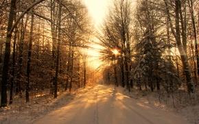 Обои деревья, свет, лес, зима