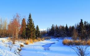 Картинка лед, зима, лес, снег, озеро