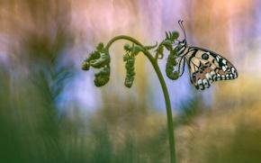 Картинка фон, бабочка, насекомое, папоротник, обои от lolita777