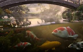 Картинка вода, рыбы, мост, пруд, кои, Antonis Fylladitis, карпы кои
