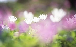 Картинка поле, трава, цветы, нежность, размытость, белые, сиреневые