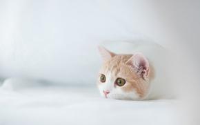 Обои © Ben Torode, Hannah, котенок