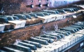 Обои орган, паутина, музыка