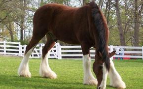 Картинка лето, трава, конь, копыта