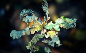 Картинка макро, лист, скрюченный, осень, сухой