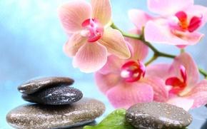 Обои цветы, капельки, орхидея, листики, спа камни