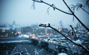 Картинка снег, город, Зима, ветка