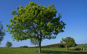 Картинка поле, лето, деревья, Природа, summer, trees, field, nature