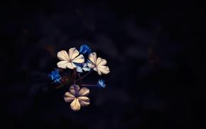 Картинка фон, цветочки, Little Bloom