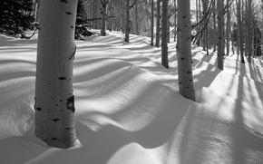 Картинка снег, зима, осина, деревья, роща, лес