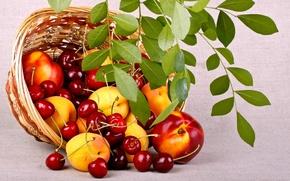 Обои ветка, природа, корзинка, персики, листья, ягоды, фрукты, еда, лето, вишня, корзина