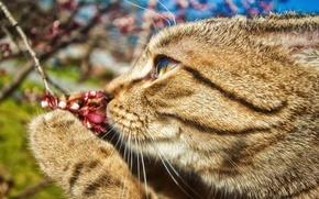 Картинка цветок, кот, усы, лапа, ветка