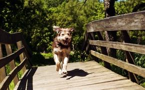 Картинка лето, мост, собака
