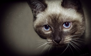 Картинка глаза, кот, свет, блик