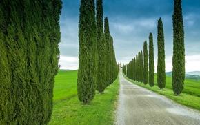Картинка дорога, поле, небо, деревья, тучи, Италия, кипарисы, Тоскана