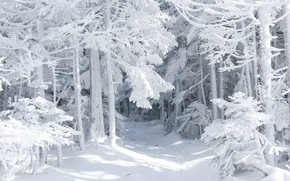 Картинка зима, лес, снег, природа, сказка