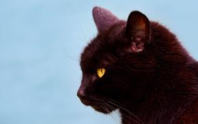 Обои кот, профиль, фон, мордочка, чёрная кошка, кошка, портрет