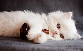 Обои взгляд, животное, бутылка, котёнок