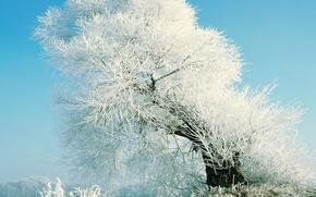 Обои дерево, иний, снег