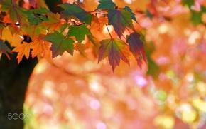 Картинка осень, природа, листва, боке, ветка, макро, дерево