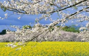 Картинка деревья, ветки, Весна, цветение