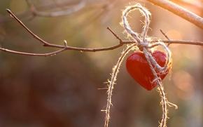 Картинка красное, сердце, ветка, веревка