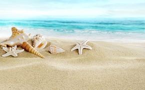 Картинка песок, море, пляж, ракушки, beach, sand, seashells