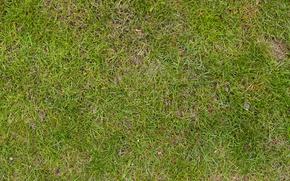Обои grass, land, soil, plant life