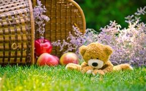 Обои медведь, корзина, игрушка, яблоки, трава
