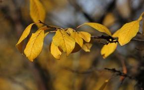 Обои солнечно, слива, листья, желтые