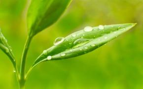 Обои роса, макро, природа, утро, листья