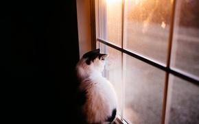 Обои кошка, дом, окно