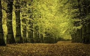 Картинка дорога, осень, деревья, природа